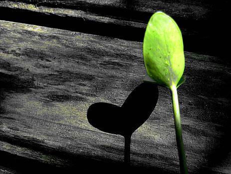 Leafy Heart by Farah Faizal