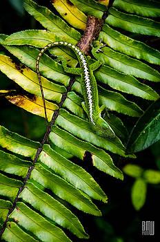 Leafy Lizard by Benjamin Weilert