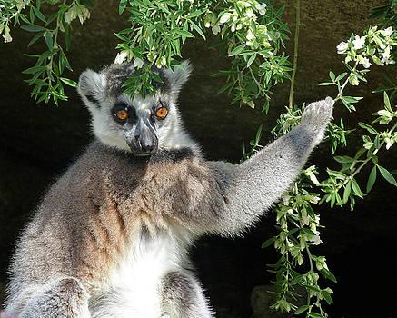 Leafy Patterned Lemur by Margaret Saheed