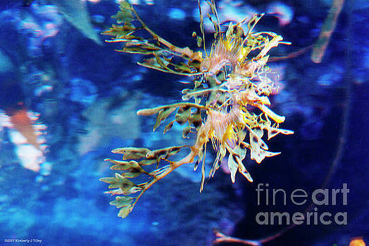 Leafy Seadragon by Kimberly Tilley