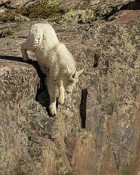 Leap of Faith by Lois Lake