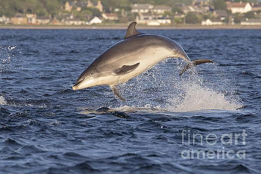 Jolly Jumper - Bottlenose Dolphin #40 by Karen Van Der Zijden