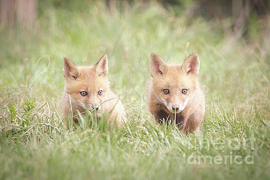 Learning to Hunt Wildlife Photography Print by Melissa Fague