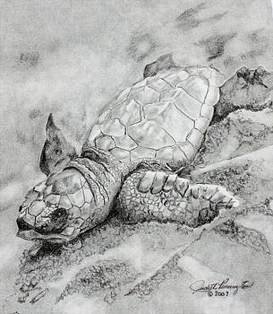Leatherback Hatchling by Judith Pennington