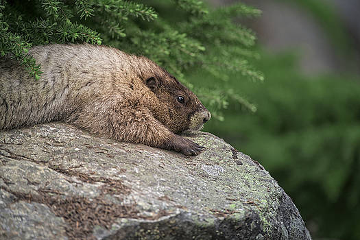 Rick Berk - Leave It To beaver