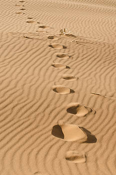 Heather Applegate - Leave only Footprints