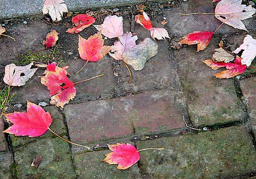 Leaves 0224 by Laura Heggestad