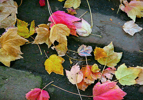 Leaves 0237 by Laura Heggestad