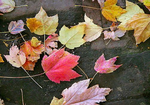 Leaves 0241 by Laura Heggestad
