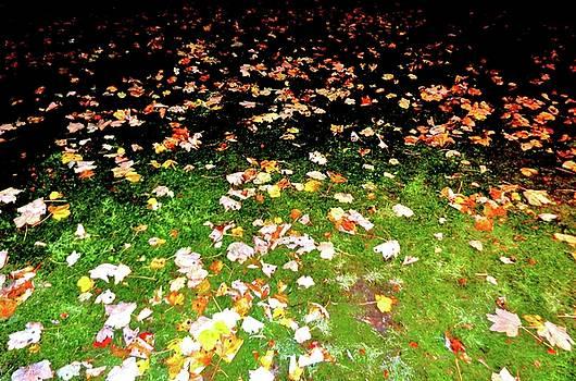 Leaves 2 by Nik Watt