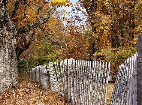 Leaves along the fence by Lois Lepisto