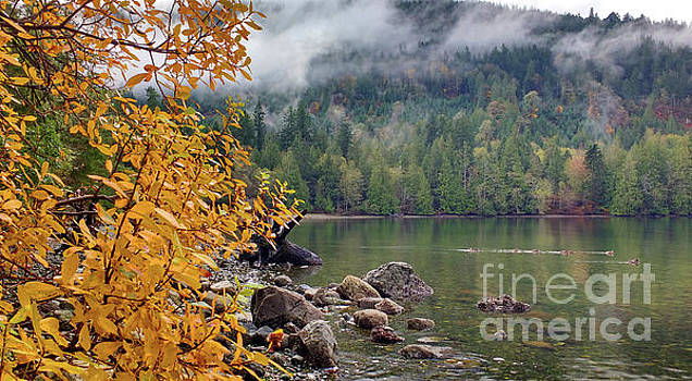 Leaves And Ducks by Mark Alan Perry