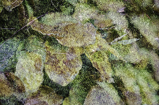 Leaves and Moss by Wendy Chapman