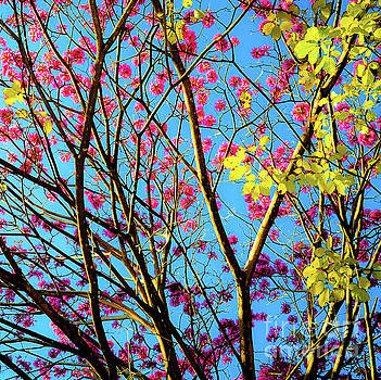 Leaves and Trees 980 by D Davila