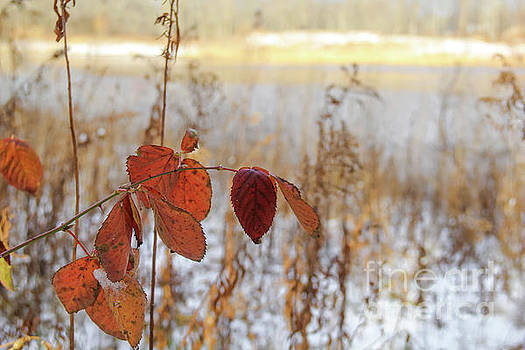 Leaves at Waverly Pond by Linda Joyce