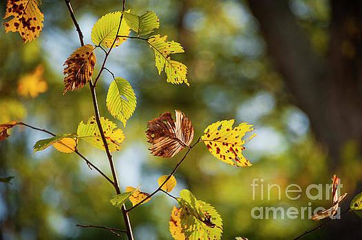 Leaves by Audrey Wilkie