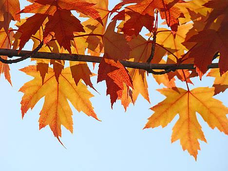 Baslee Troutman - LEAVES AUTUMN Orange Sunlit Fall Leaves Blue Sky Baslee Troutman