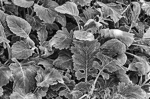 Leaves, Black and White by Richard Goldman