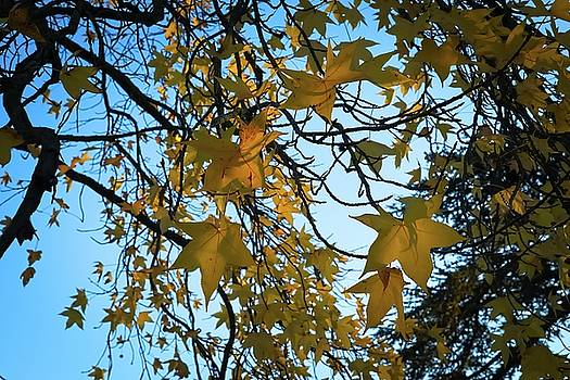 Leaves by Cendrine Marrouat