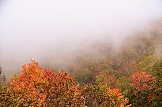 Leaves by CK Brown