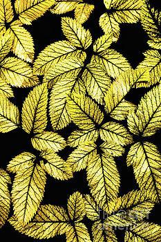 Dan Carmichael - Leaves