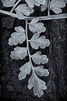 Leaves, Detail by Dw Johnson