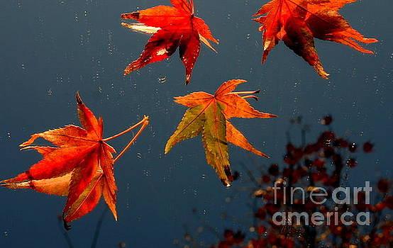 Marie Neder - Leaves falling down