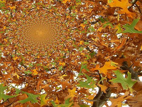 Leaves Falling from Heaven by Nola Hintzel