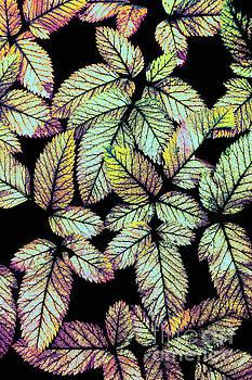 Dan Carmichael - Leaves FX
