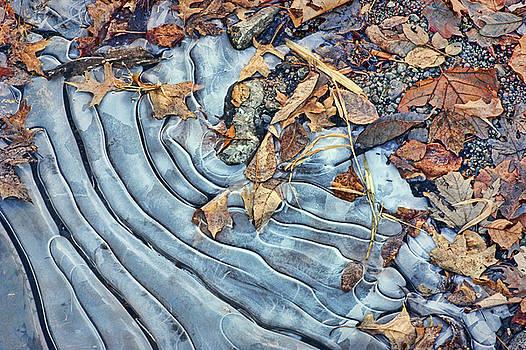Nikolyn McDonald - Leaves - Ice Patterns