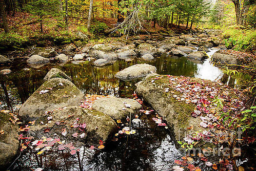 Leaves In a Stream by Alana Ranney