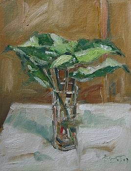 Leaves in a tall glass by Owen Hunt