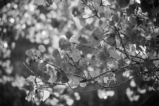 Leaves In Contrast by Sharon Wunder Photography