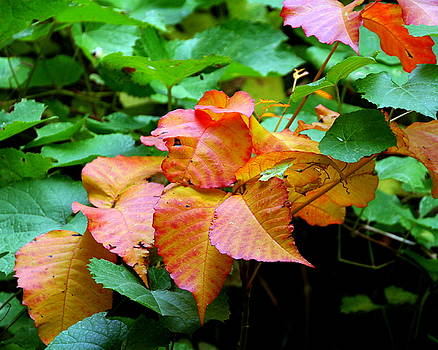 Leaves in Green and Orange by Laurel Talabere