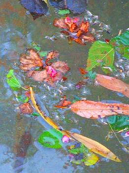 Leaves In Pond by Bill Vernon