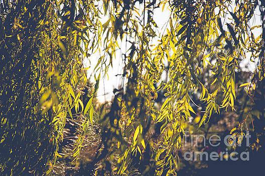 Mariusz Talarek - Leaves in sun