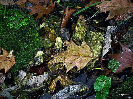 Leaves by Julie Grace