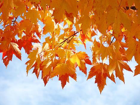 Baslee Troutman - LEAVES Nature Art Orange Autumn Tree Leaves