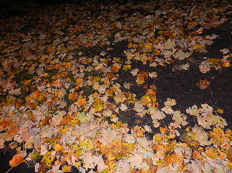 Leaves by Nik Watt