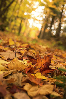 Leaves of Autumn by Frederico Borges