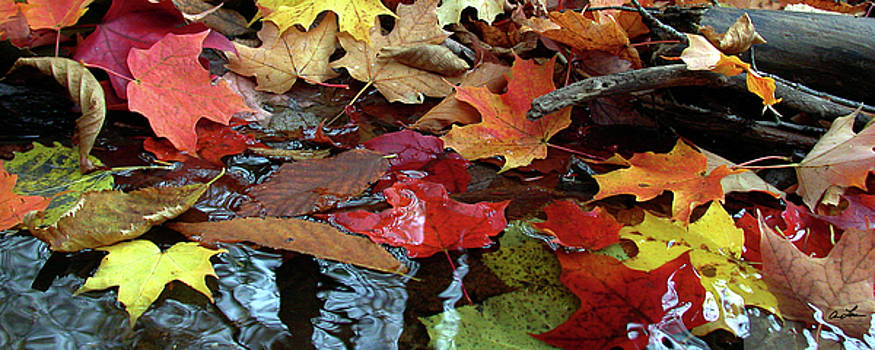 Leaves of Color by Ann Lauwers