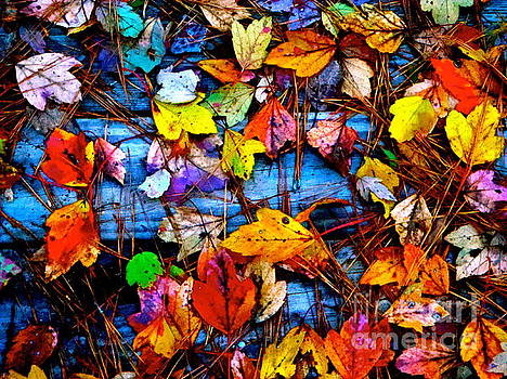 Leaves of Colors  by Cathy Dee Janes
