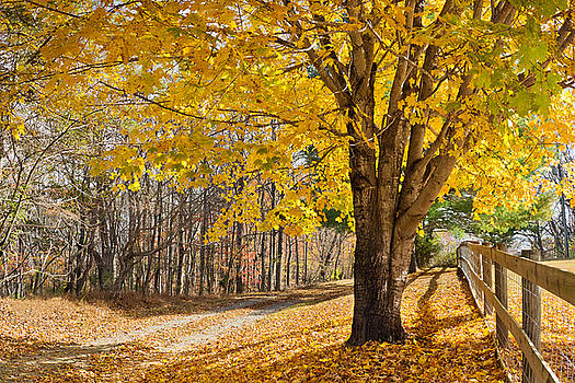 Leaves of Gold by Greg Dollyhite