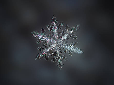 Leaves of ice II by Alexey Kljatov