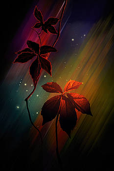 Leaves of Three by Judy  Johnson