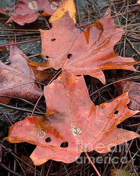 Leaves-Old Leaves by April Bielefeldt