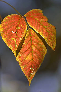Leaves on a Branch by Paul Pobiak