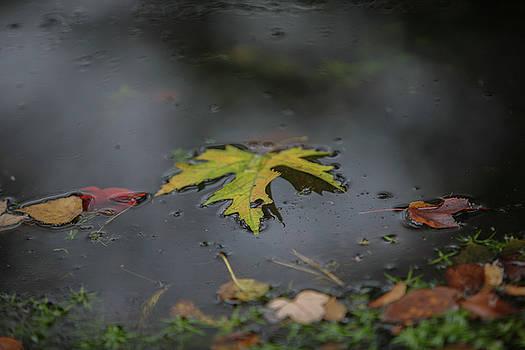 Leaves on Sampawams Creek by Steve Gravano