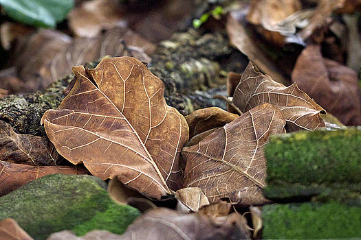 Mother Nature - Leaves on the Stairs