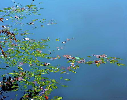 Leaves on Water by Coleman Mattingly